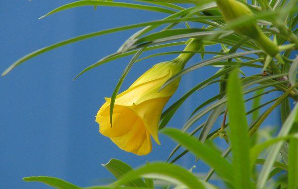 Gelbe Blume -Foto: Danzer_Christine - go4jesus