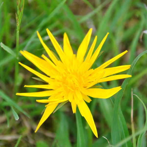Gelbe Blume - Foto: Christine Danzer - go4jesus
