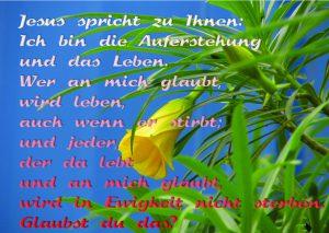 Blume mit Johannes 11,25 - Jesus spricht: Ich bin die Auferstehung und dass Leben - Christine Danzer - go4jesus
