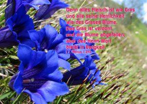 Enzian- 1. Petrus 1,24 -Alles Fleisch-Christine Danzer -go4jesus