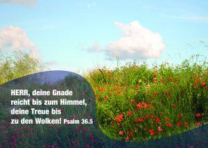 Mohnblume mit Wolke - Psalm 36,5 - Danzer Christine -go4jesus