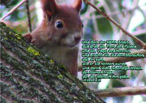 Eichhörnchen -Tierbenennung 1. Mose 2,19 -Eichhörnchen- Christine Danzer - go4jesus