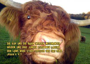 Die Kuh und die Bärin werden miteinander weiden - Jesaja 11, 6-7- Christine Danzer -go4jesus