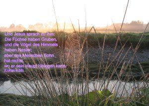 Spinnennetz -... das Haupt betten - Lukas 9,59 - Christine Danzer - go4jesus