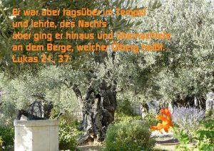 Ölgarten - Lukas 21 - Walter Hagel -go4jesus