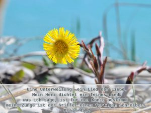 Hufflatich am Süßwassermeer - Bibelzitat Psalm 45, 2- ein Lied der Liebe. Mein Herz dichtet ein feines Lied; was ich sage, ist für den König bestimmt, meine Zunge ist der Griffel eines fertigen Schreibers. -Foto: Christine Danzer - go 4 jesus