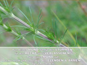 Stengel - Tue deinen Mund auf für den Stummen, für das Recht aller Verlassenen! -Christine Danzer - go4jesus