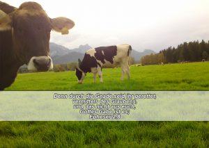 Kühe - Bibelzitat -Gnade-Epheser 2,8- go 4 jesus, Danzer, Christine