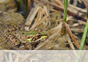 Fotophiler Frosch- Bibelzitat- Psalm 85,7 - go 4 jesus -Danzer, Christine