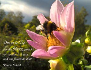 Hummel auf der Blume - go 4 jesus - Christine Danzer