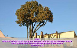 Baum in der Nähe der Schlosskirche in Wittenberg - Christine Danzer - go 4 jesus - bibel
