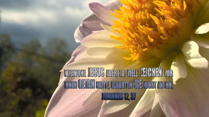 Rosa Blume - Themenbild: Wunder/Heilung/Werke Jesu in der Bibel-go 4 jesus -Bibel - Christine Danzer