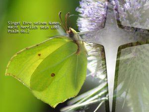 Schmetterling- Psalm 66,2 - Foto: Christine Danzer - go 4 jesus