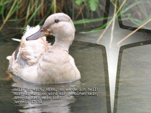 Ente - Jeremia 17, 14 - Foto: Christine Danzer - go 4 Jesus - Bibel