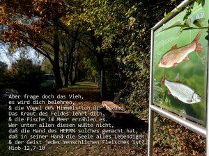 Fische - Hiob 12, 7-10 - Foto: Christine Danzer - go 4 Jesus - Bibel