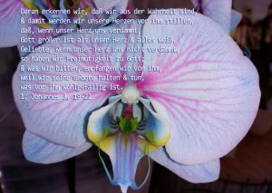 Rosa Orchidee mit Bibelzitat, Christine Danzer - go 4 jesus - Bibel