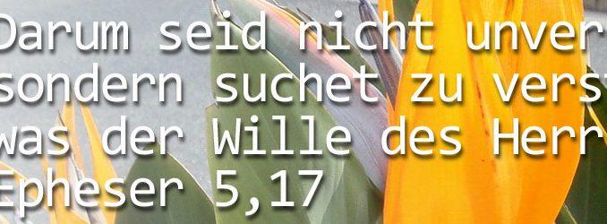 header_bibel_beten02 - Foto: Christine Danzer - go 4 Jesus - Bibel
