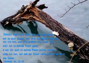 Ast im Eis-Bibelzitat - Johannes 14,12 - Foto: Christine Danzer - go 4 Jesus - Bibel