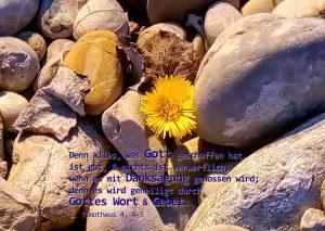 Hufflatich-Danksagung mit 1. Timotheus 4, Foto: Christine Danzer, go 4 Jesus, Bibel