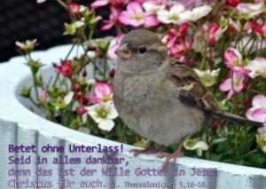Spatz - Froehlich 1. Thessalonicher 5, Foto: Christine Danzer, go 4 JEsus, Bibel