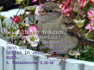 Spatz, 1 Thessalonicher 5,16-18, Foto: Danzer, Christine, go 4 Jesus, Bibel