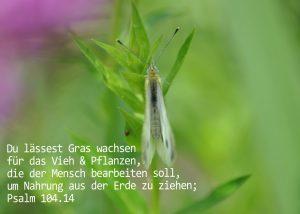 Falter mit Psalm 104,14, Foto: Christine Danzer, go 4 Jesus, Bibel, Jesus
