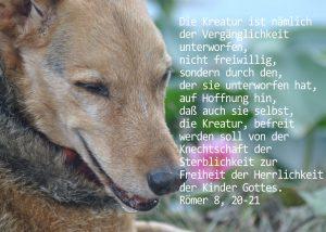 Hund, Römer 8,20-21, Foto: Danzer, Christine, go 4 Jesus, Jesus, Bibel