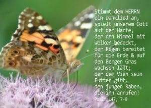 Kleiner Fuchs, Psalm 147, 9 , Foto: Danzer, Christine, go 4 Jesus, Bibel, Jesus,