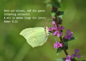 Zitronenfalter, Römer 8,22, Foto: Christine Danzer, go 4 Jesus, Bibel, Jesus