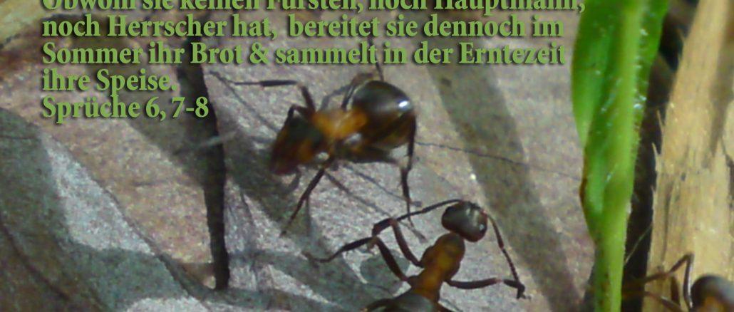 Ameisen, Sprüche 6,7-8, Foto: Chrsi´tine Danzer , go 6 jesus