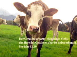 Kühe, Sprüche 12.10, Foto: Christine Danzer go 4 Jesus
