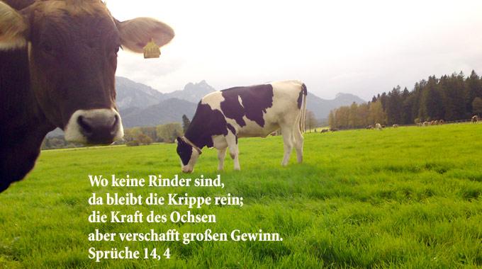 Bibelzitat, Sprüche 14,1, Foto: Chrstine Danzer go 4 jesus