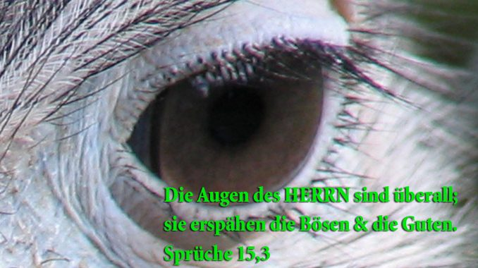 Auge, Spüche 15,3 , FotO Christine go 4 jesus