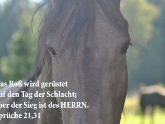 Bibel, Zitat, Pferd, Sprüche 21,31, Danzer, Christine, go 4 Jesus