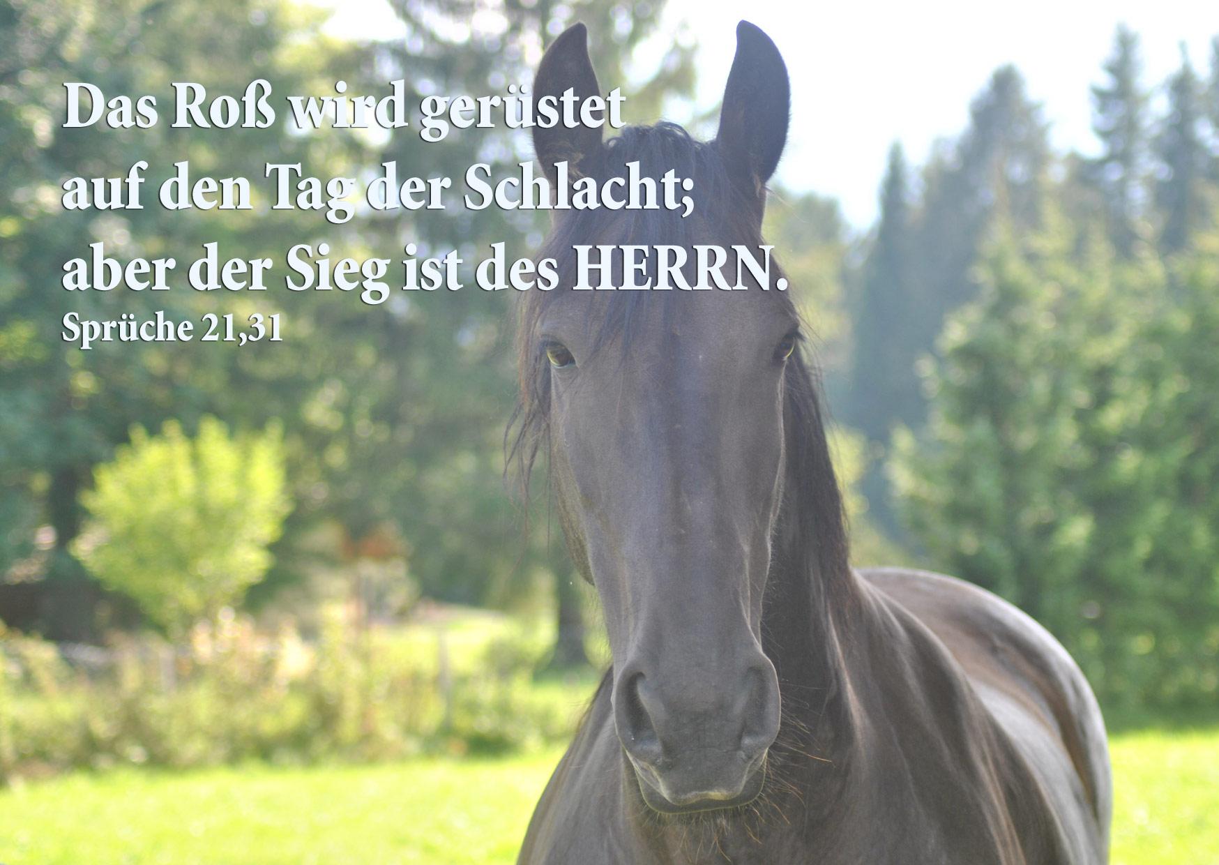Bibelzitat, Pferd, Sprüche 21,31 Foto: Danzer, Walter, go 4 Jesus, Bibel