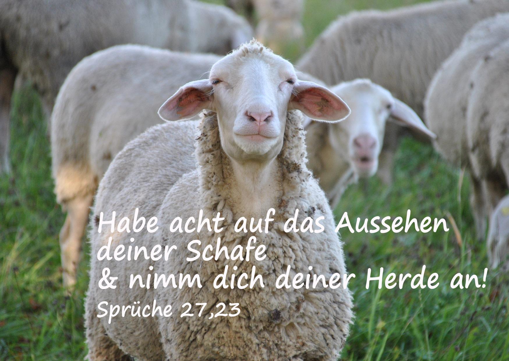 Bibelzitat, Sprüche 27,23, Schaf, Foto: Danzer, Chrstine, go 4 Jesus, Bibel