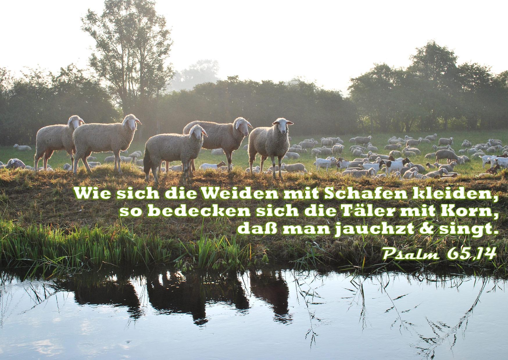 Bibelzitat, Psalm 65,14, Foto: Christine Danzer, go 4 Jesus, Bibel