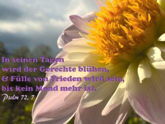 Bibelzitat, Blume mit Psalm 72,7, Bibel, Jesus, Foto: Danzer, Christine