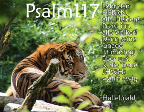Tiger mit Psalm 117, Bibel Foto: Thomas Hoffmann, go 4 jesus