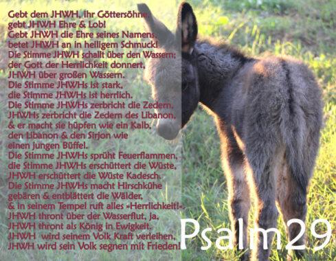 Bibel, Esel mit Psalm 29, Foto: Thomas Hoffmann, go 4 Jesus
