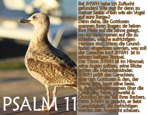 Bibel, Möwe mit Psalm 11, Foto: Thomas Hoffmann, go 4 Jesus
