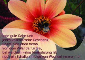 Blume mit Hummel - Jakobus 1,17 - Christine Danzer -go4jesus