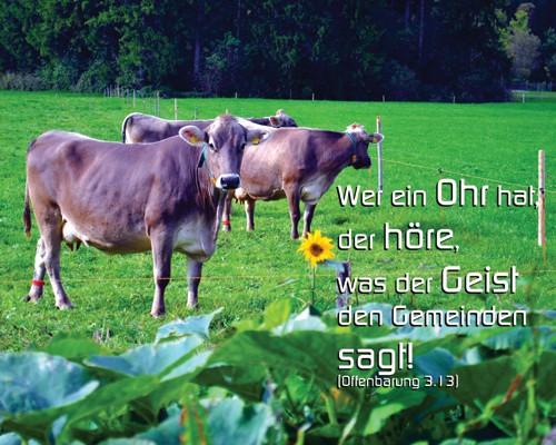 Kühe auf dem Feld - Wer Ohren hat der höre - Christine Danzer - go 4 jesus