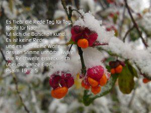 Pfaffenhütchen im Schnee - BibelzitatPsalm 19,3-5 Es fließt die Rede Tag für Tag, Nacht für Nach tut sich die Botschaft kund - Foto: Christine Danzer - go 4 jesus