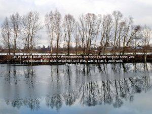 Bäumespiegelung - BibelzitatPsalm 1,3 - Christine Danzer - go 4 jesus