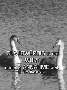 Junge Schwäne - Glaubwürdig ist das Wort - Foto: Christine Danzer - go 4 jesus