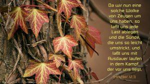 Efeu- Hebräer 12, 1 - Bibel - Fabian Will - go4jesus