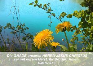 Löwenzahn- Bibelzitat Galater 6,18 - go 4 jesus - Danzer, Christine