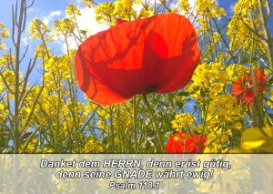 Mohnblume- Bibelzitat Psalm 118,1 - go 4 jesus - Danzer , Christine