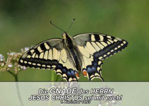 Schmetterling- Bibelzitat 1. Kor. 16,23 - go 4 jesus - Danzer, Christine